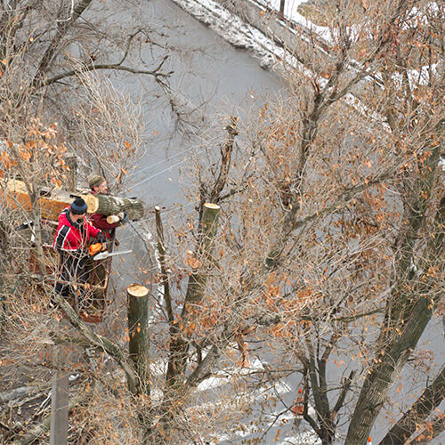 Tree Removal Kitchener Waterloo.