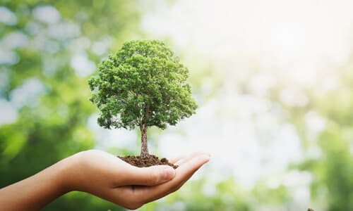 How long does it take for a tree to grow today?