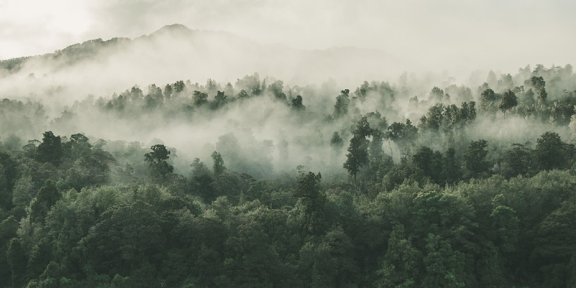 Aerial view of a foggy forest.