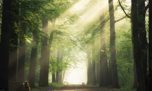 A forest with sunlight shining through.