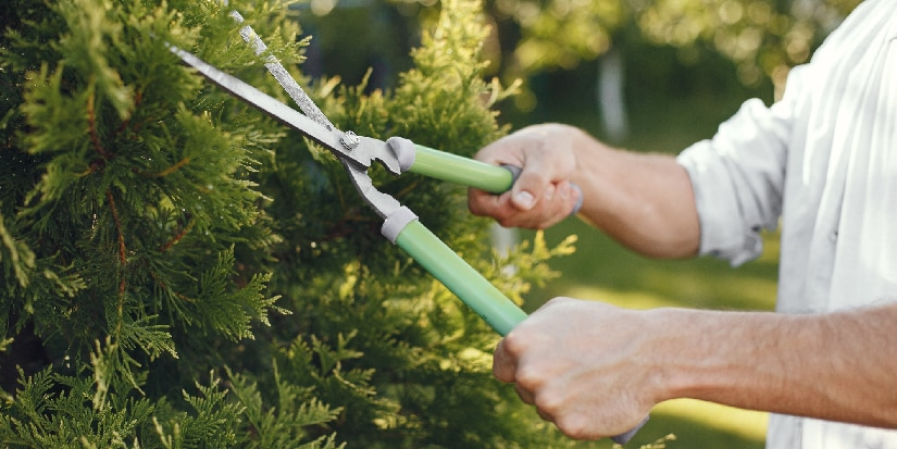 What is pruning header image, a man pruning a tree.